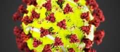 Bild könnte enthalten: Blume, Pflanze und Essen